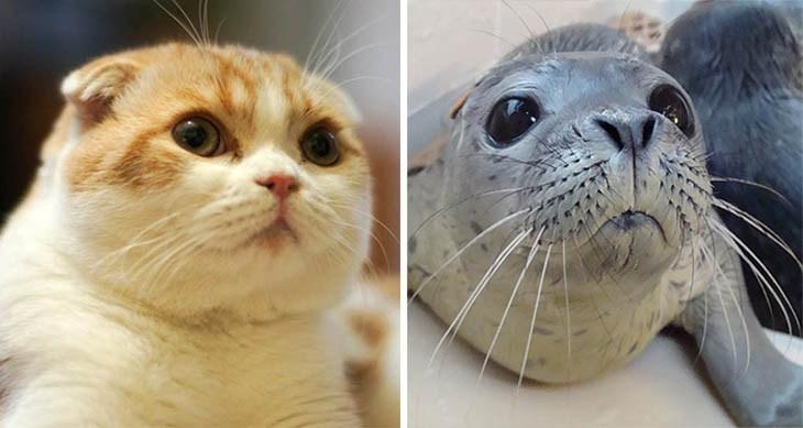 кот и морской котик