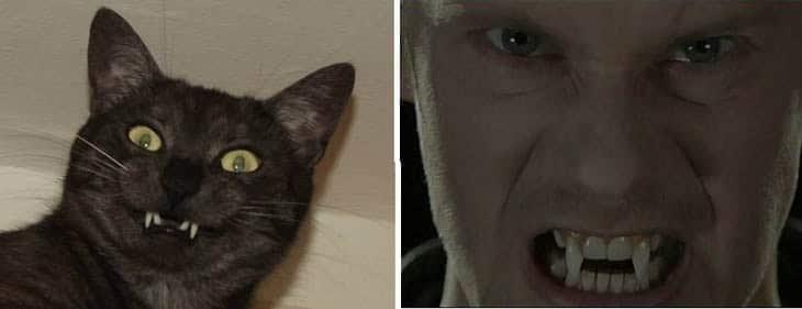 черный кот и мужчина с клыками