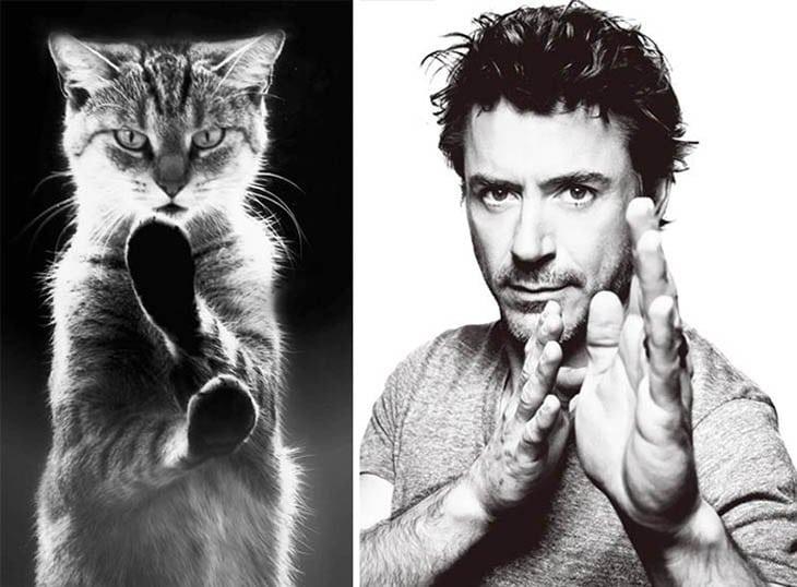 кот и роберт дауни-младший