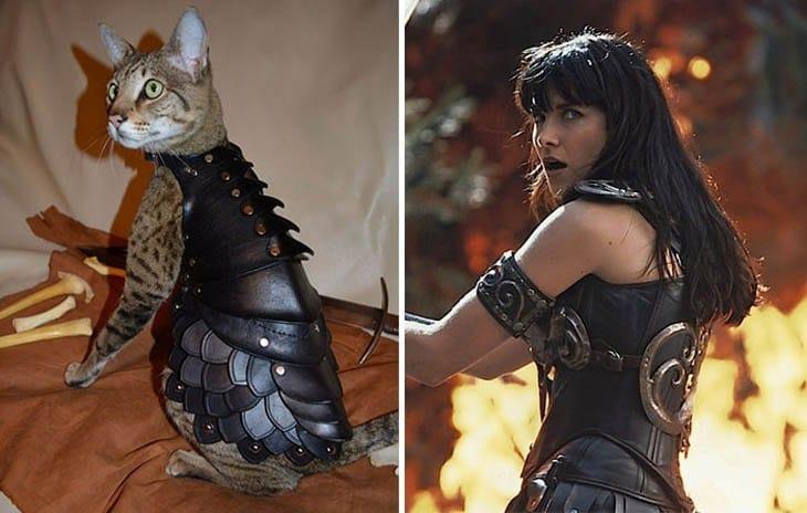 кошка и ксена принцесса-воин