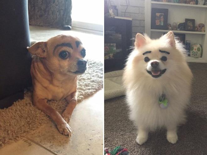 две собаки с бровями