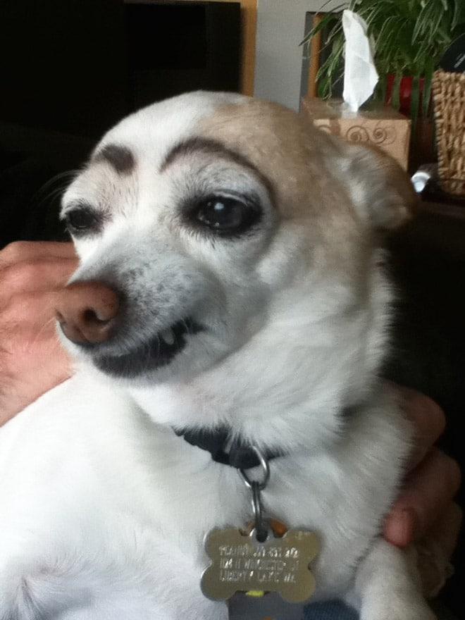 собака с черными бровями