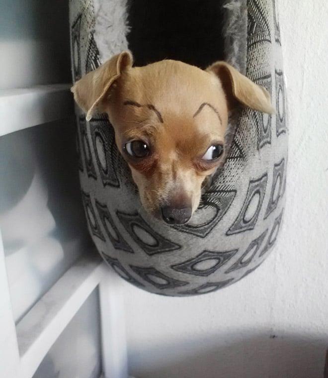 рыжий щенок с бровями