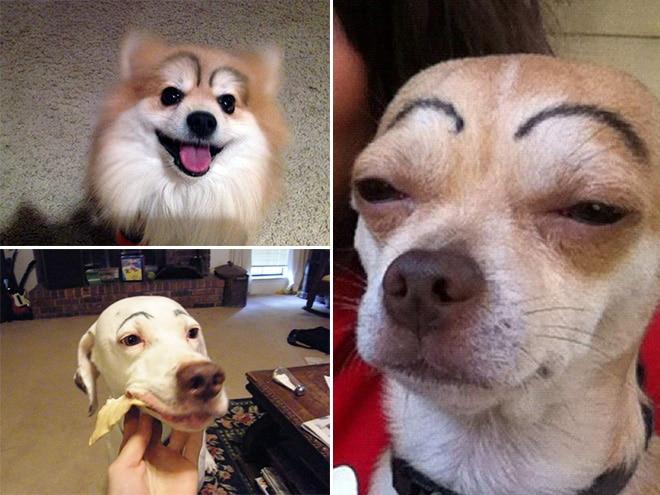 собаки с нарисованными бровями
