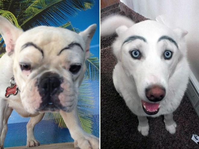 две собаки с черными бровями