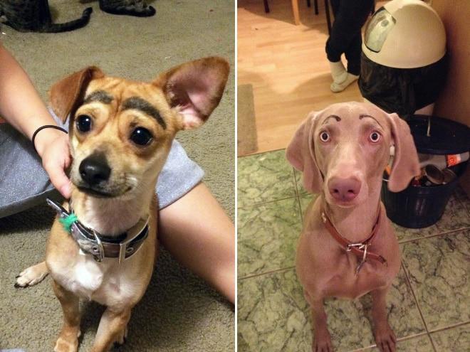 две собаки с нарисованными бровями