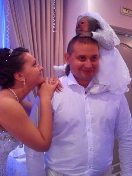 мартышка в свадебном платье на женихе