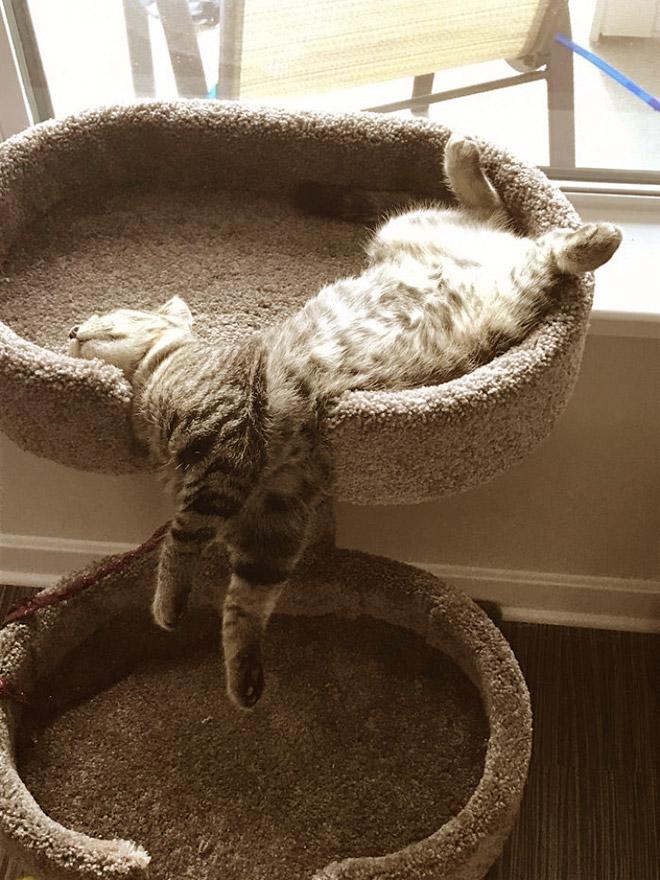кот спит свесив лапы