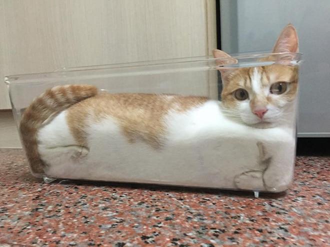 рыже-белый кот в прозрачном контейнере