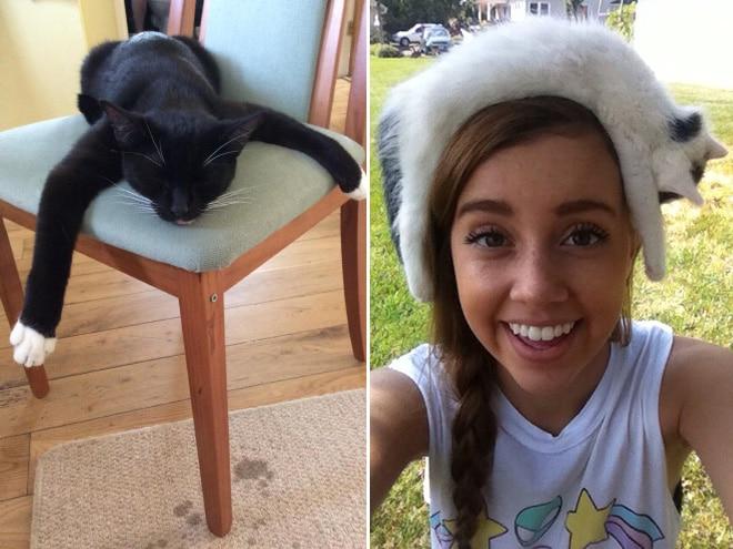 кот на голове у девушки