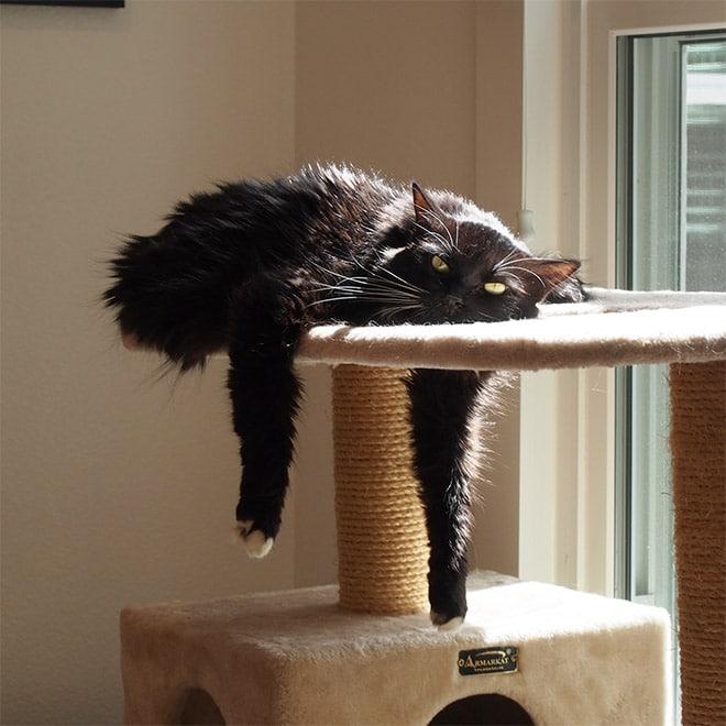 черный кот лежит на когтедралке