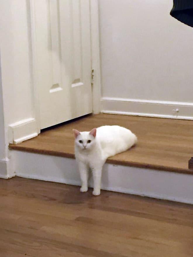 белый кот лежит на ступеньке