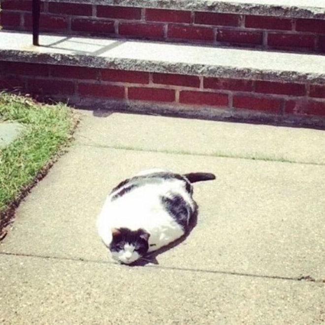 кот лежит на асфальте