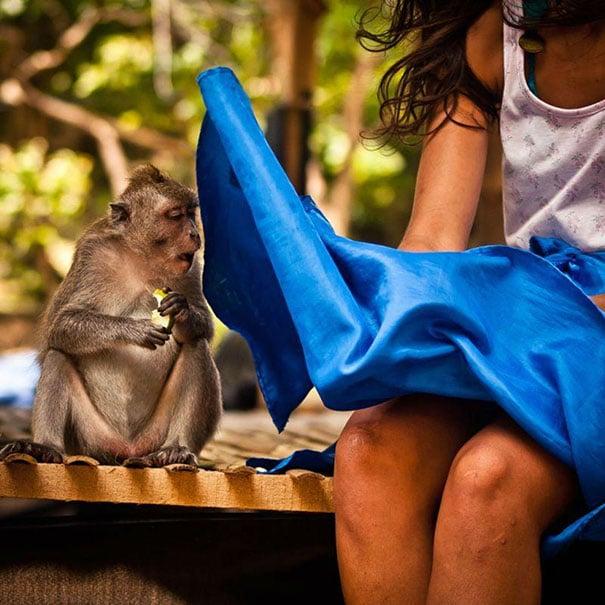 обезьяна заглядывает под юбку девушке
