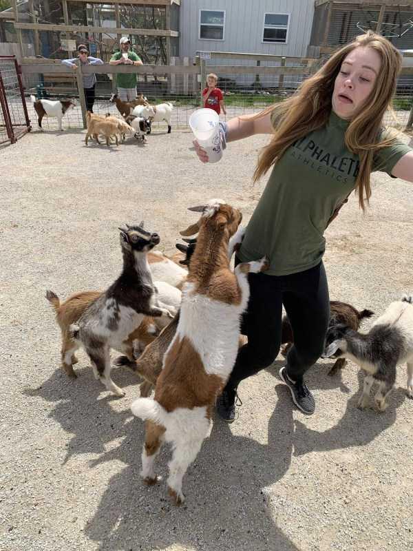 девушка в окружении козлят