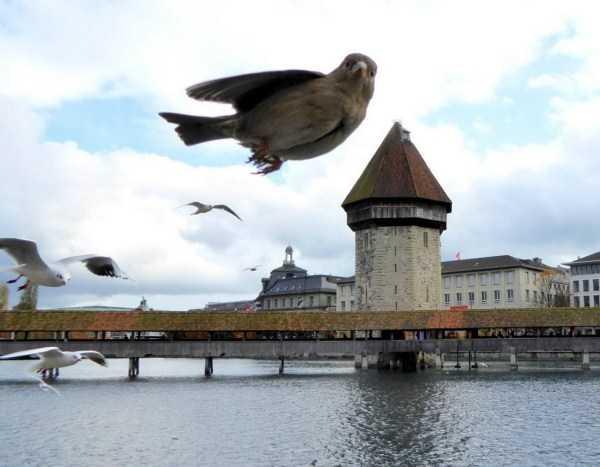 птица на фоне замка