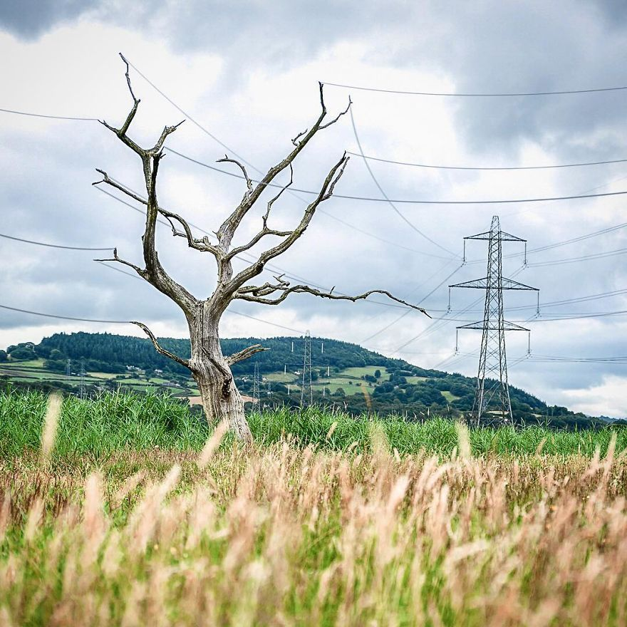 провода на дереве