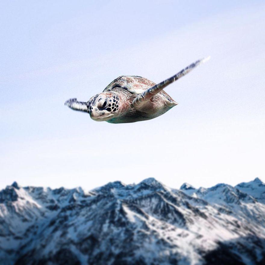 черепаха летит над землей