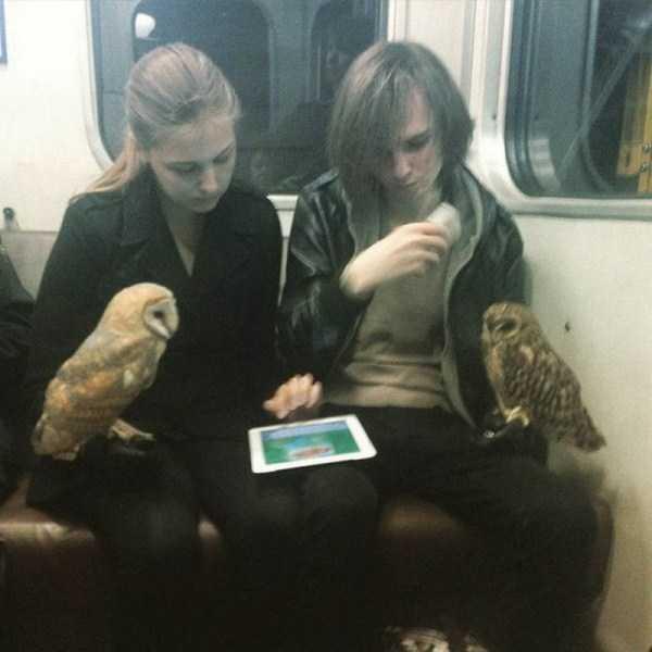 парень и девушка в метро с совами