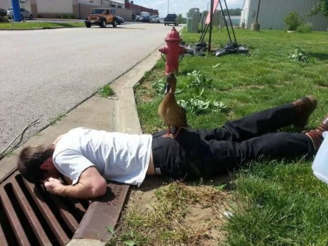 парень лежит на обочине с уткой на спине