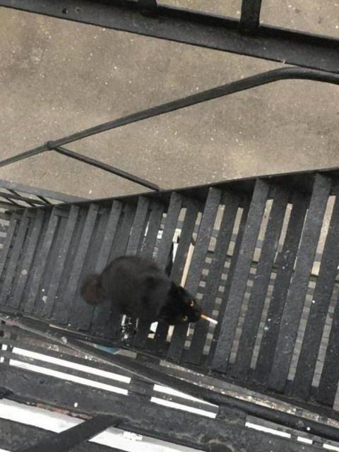 черный кот с сигаретой