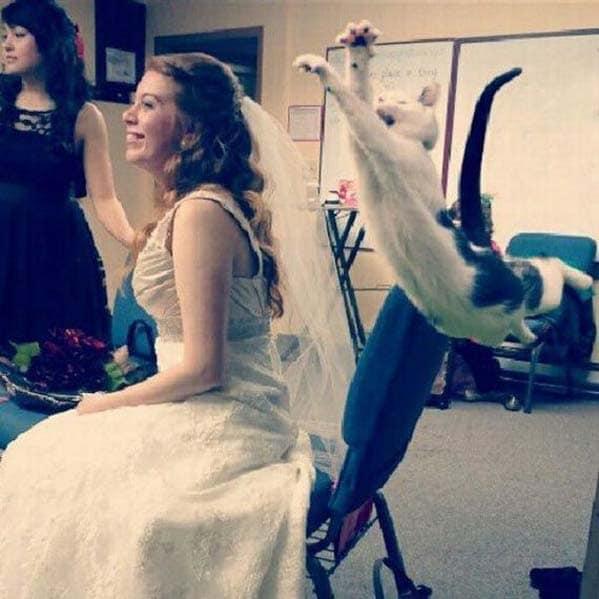 кошка прыгает на невесту