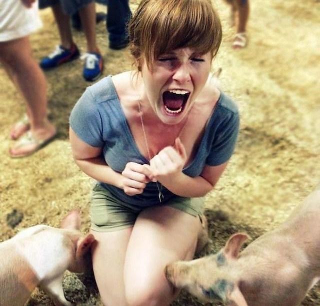 свиньи нюхают кричащую девушку
