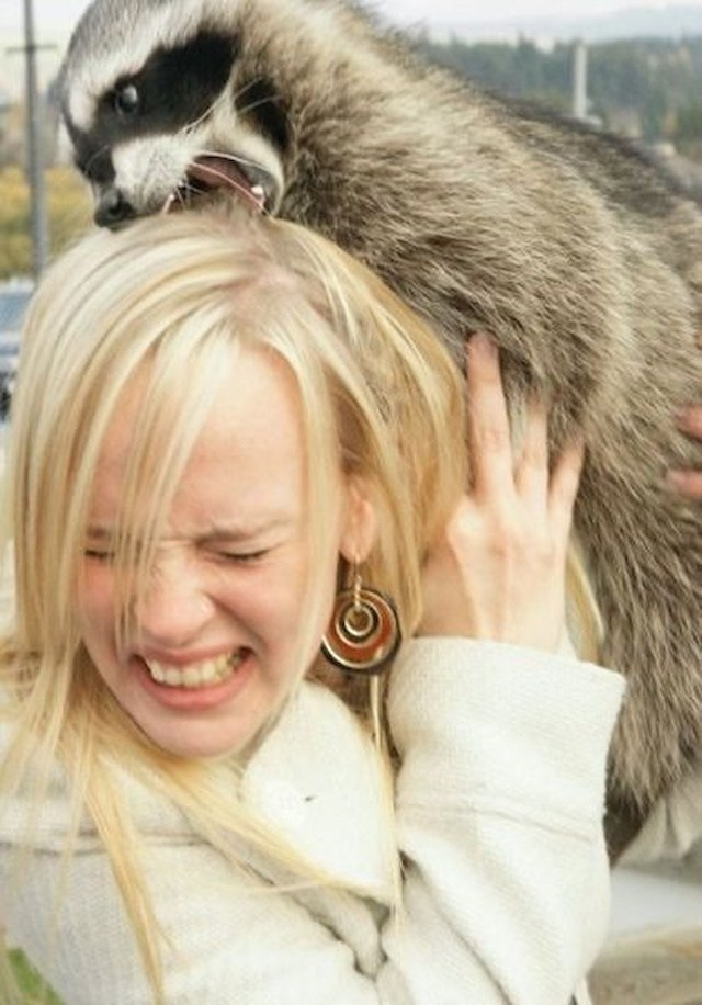 енот кусает блондинку за голову