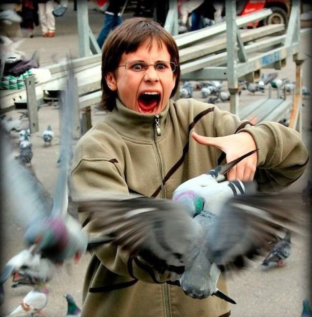 голуби напугали женщину