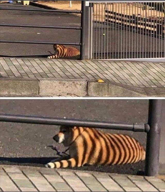 рыжая собака лежит под забором