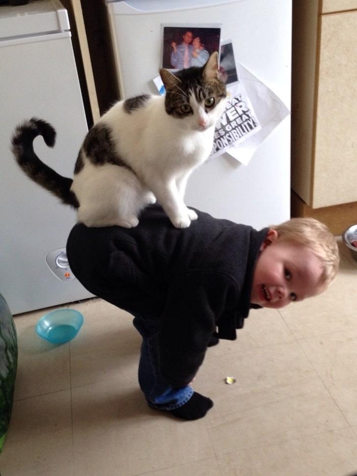 кот сидит верхом на ребенке