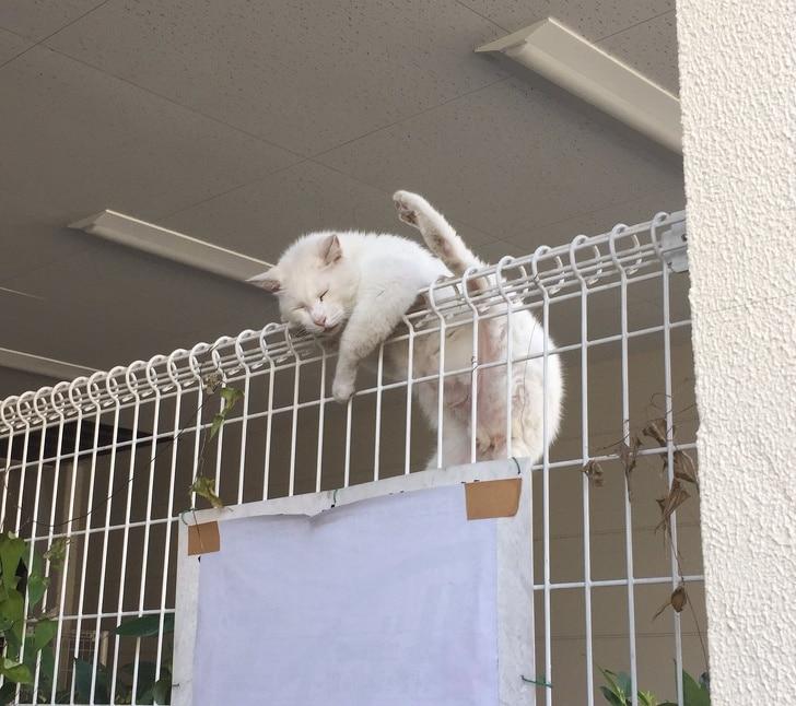 белый кот спит на заборе