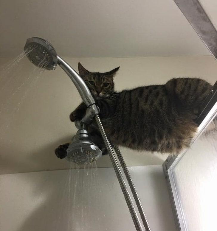 полосатый кот в ванной