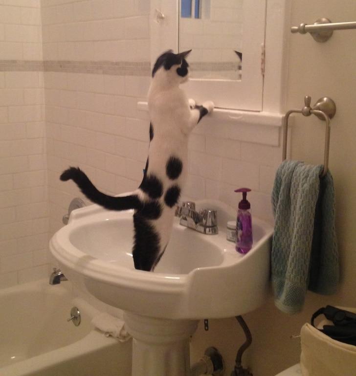 черно-белый кот стоит в раковине
