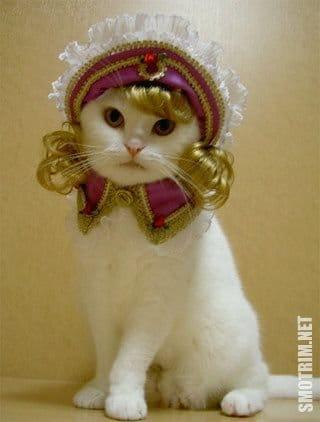Смешные фото приколы про котов и кошек