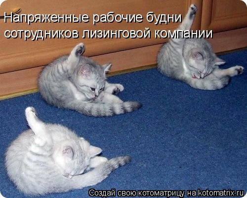 1562341147_kotomatricy-1-1