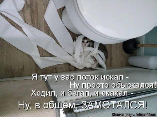 1562955168_kotomatricy-1-1