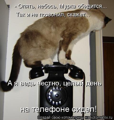 Лучшая котоматрица недели (51 фото)