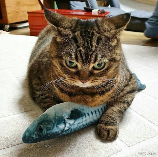 День рыбака  Приколы,прикол,приколы про рыбалку,рыбаки
