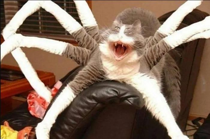 серый кот на спинке кресла