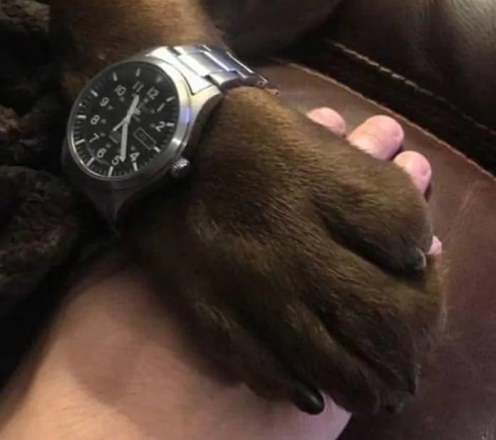 часы на лапе собаки