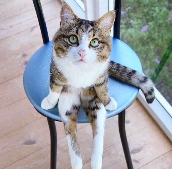 полосатый кот сидит на стуле