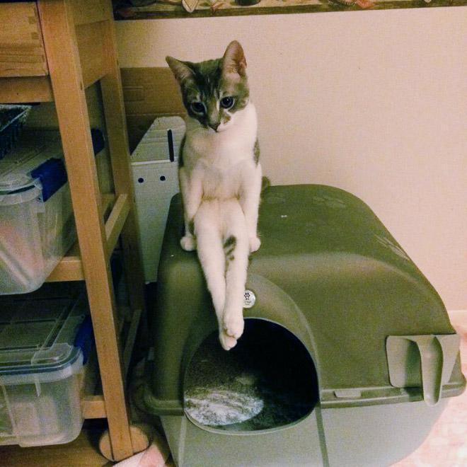 кот сидит на своем домике