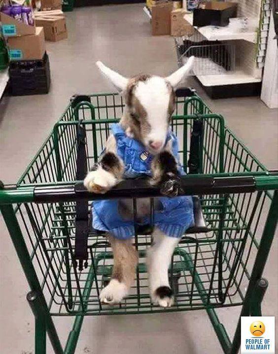 козленок в тележке из супермаркета
