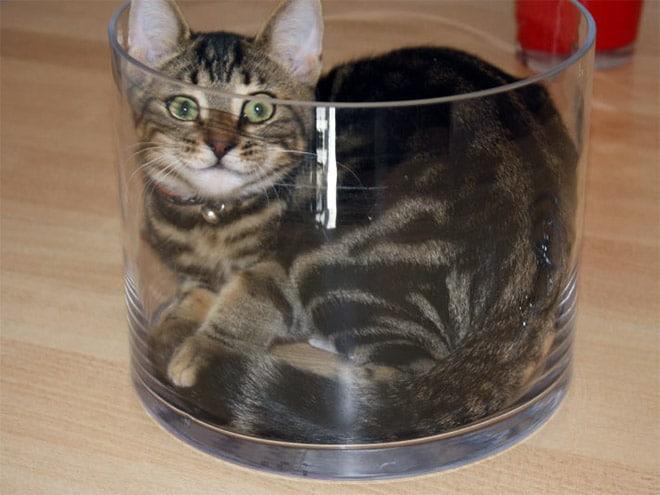 полосатый кот в стеклянной посуде
