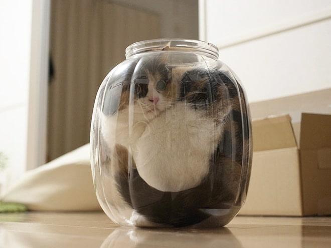 кот сидит в стеклянной банке