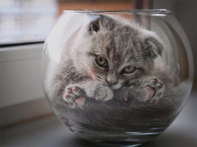серый кот сидит в аквариуме