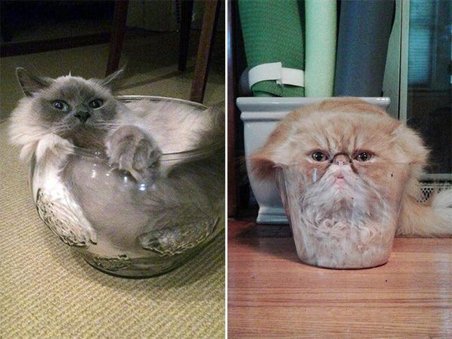 коты сидят в стеклянной таре