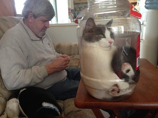 кот сидит в стеклянной банке на столе