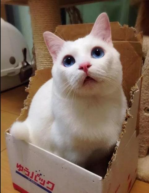 белый кот сидит в коробке